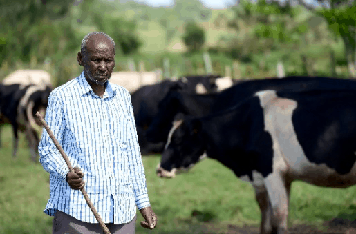 Uganda's Livestock Industry Development Plan