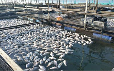 Morocco Agriculture fisheries