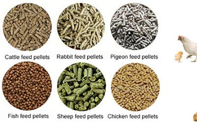 How to choose the animal feed pellet machine?