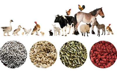 The role of feed pellet machine in animal husbandry